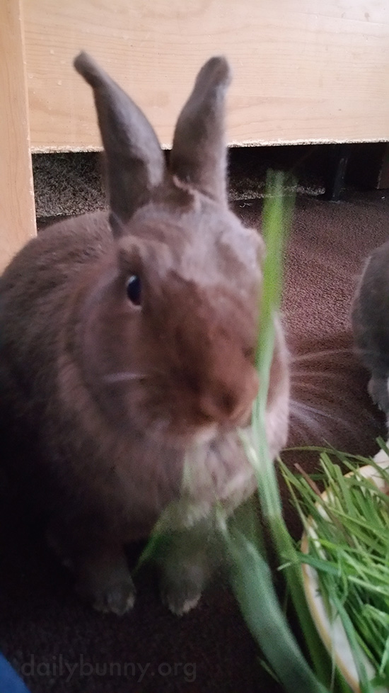 Bunnies Share a Bowl of Grass 1