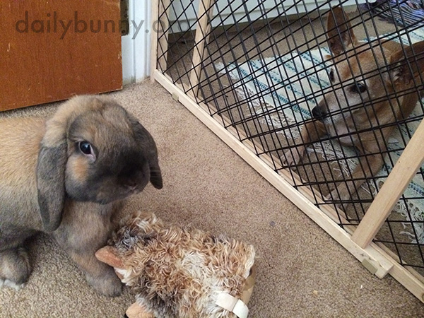 Bunny Brings His Plush Friend Around with Him 2