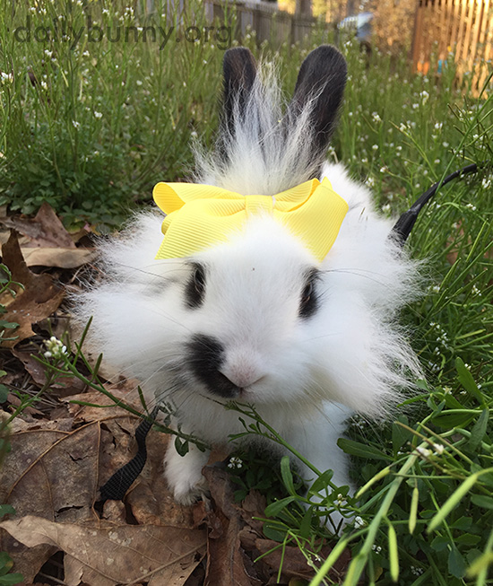 Bunny Enjoys Some Spring Weather Outdoors 1