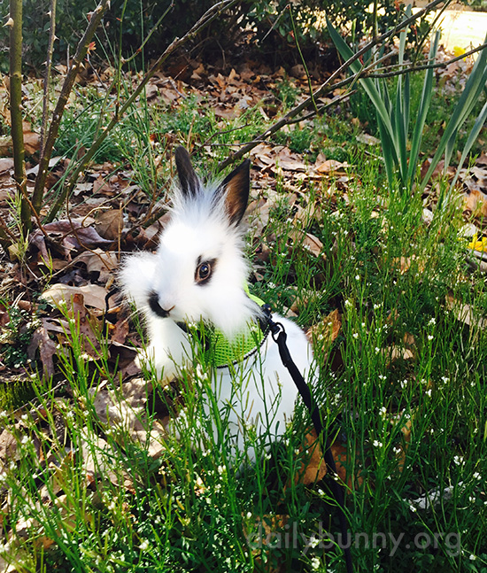 Bunny Enjoys Some Spring Weather Outdoors 2