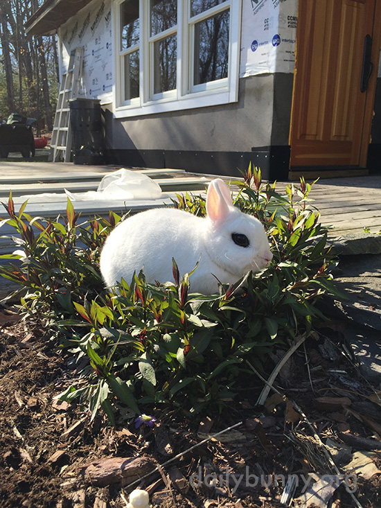 Bunny Found a Flower Bush to Relax On