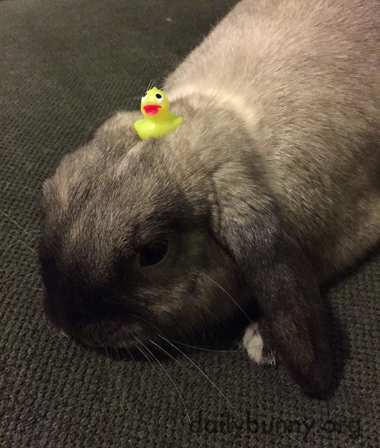 Bunny Has a Tiny Toy on His Head