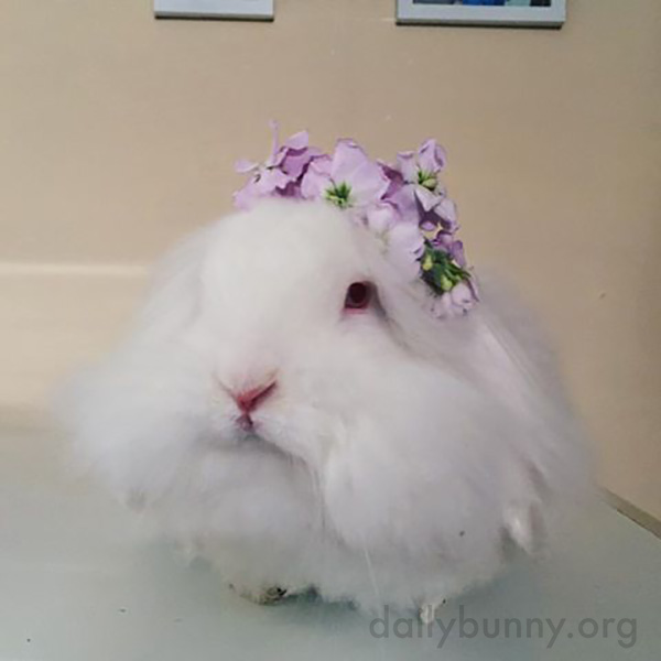Bunny Has a Very Nice Flower Crown