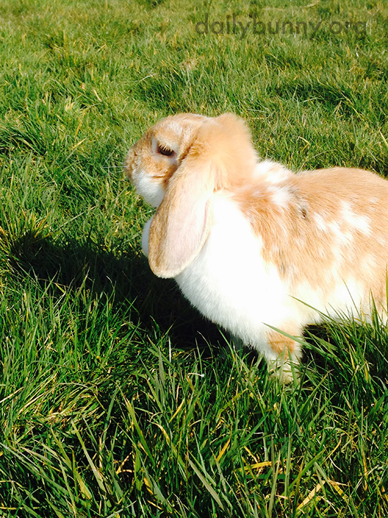 Bunny Leans In for a Big Breath of Fresh Air