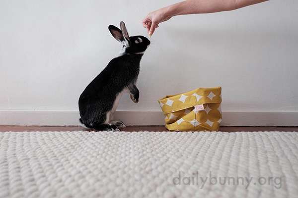 Bunny Will Model for Treats