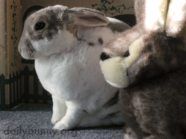 Bunny and Her Stuffed Friend Sit in Contemplative Silence