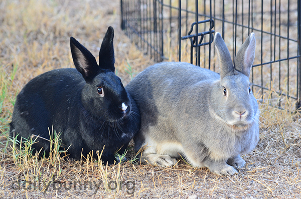 Bunnies Enjoy Sitting in the Grass Together