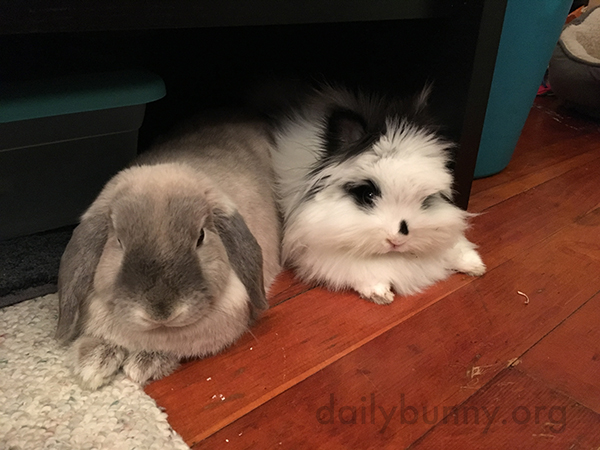 Bunnies Relax Together and Want Treats Together 1