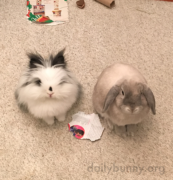 Bunnies Relax Together and Want Treats Together 2