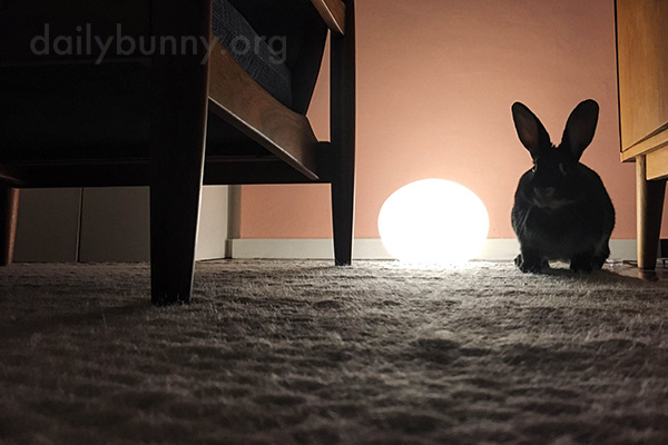 Bunny Can Appreciate a Nice Atmosphere