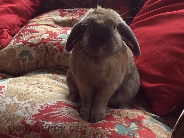 Bunny Can Display Wonderful Manners When She Wants To