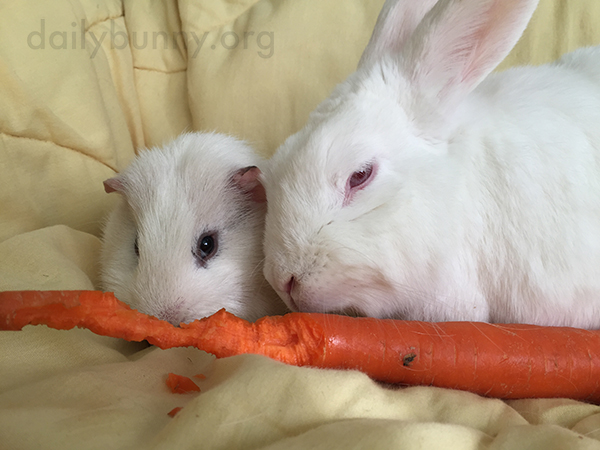 Bunny Graciously Shares a Carrot with Her Friend