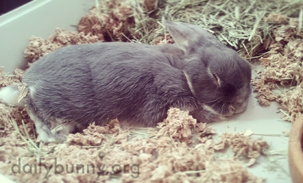 Bunny Is Such a Sweet Sleeper