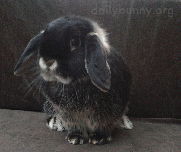 Bunny Looks Inquisitive and Innocent