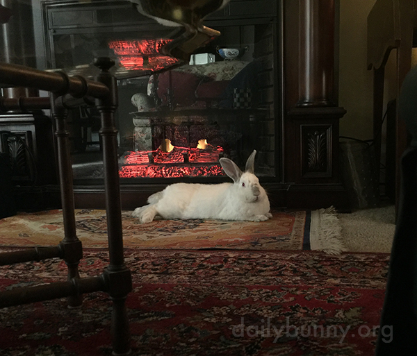 Bunny Lounges in Various Places Around the House 1