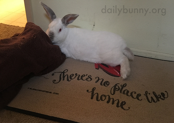 Bunny Lounges in Various Places Around the House 2
