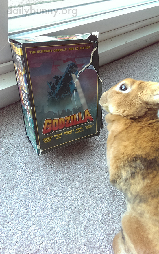 Bunny Picks Out a Movie to Watch with Human 1