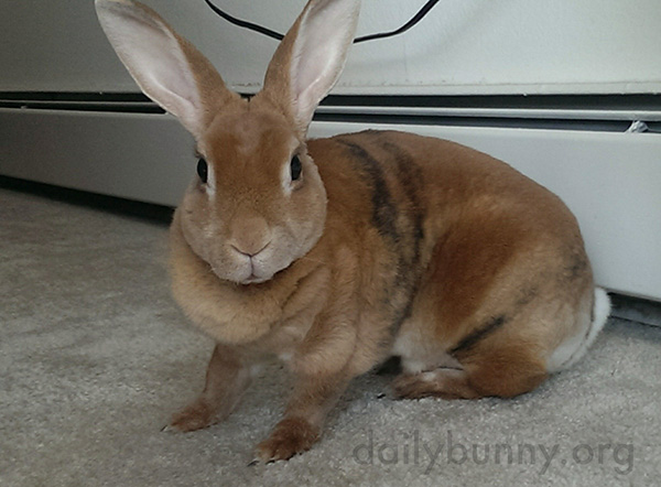 Bunny Picks Out a Movie to Watch with Human 2