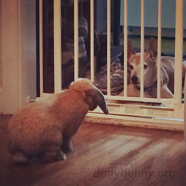 Bunny Tentatively Approaches the Dog to Say Hello
