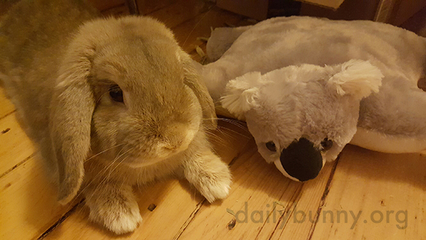 Bunny and His Koala Friend Spend Some Quality Time Together