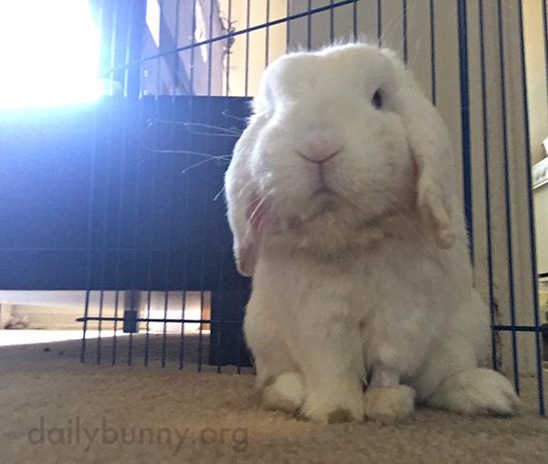Bunny's Leg Is a Little Less Fluffy