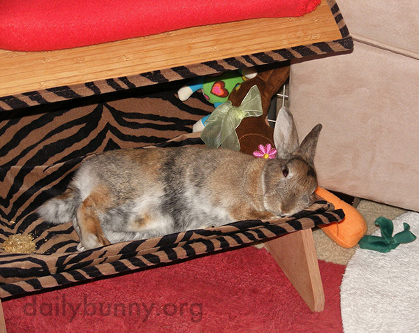 Someone Should Hire Bunny as a Bed Tester 2