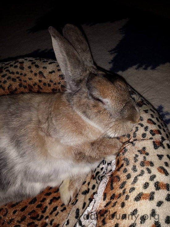 Someone Should Hire Bunny as a Bed Tester 3