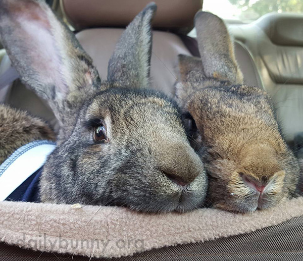 A Pair of Bunny Noses