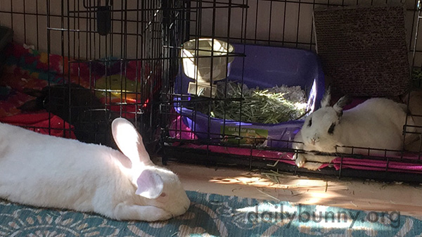 Bunnies Put Aside Their Differences for Naptime 2