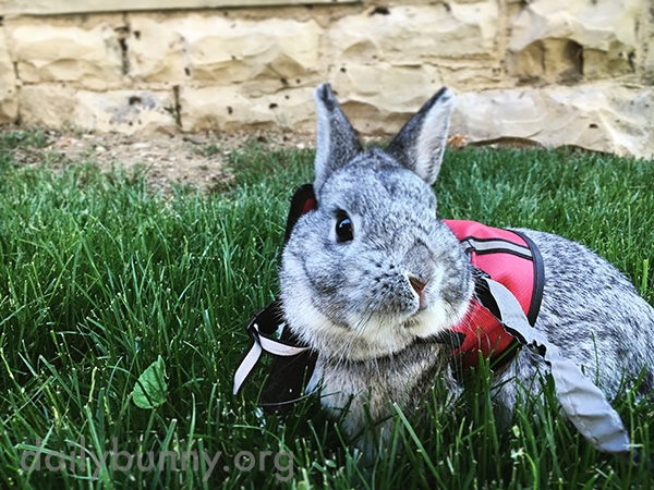 Bunny Enjoys Some Fresh Air and Crisp, Green Grass