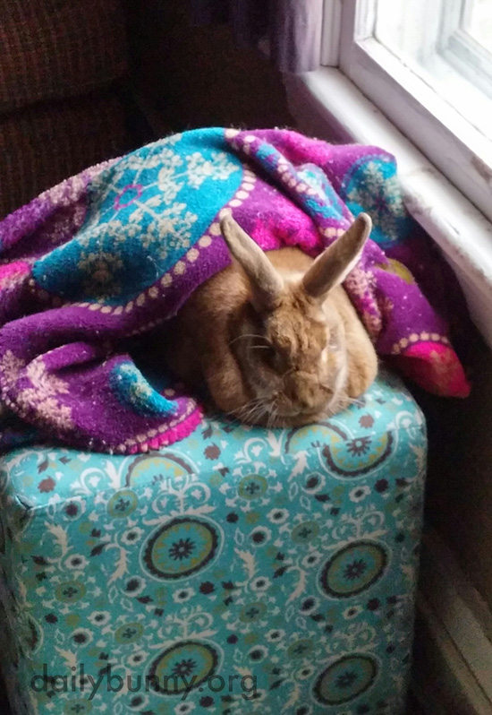 Bunny Has Many Ways of Getting Cozy 1