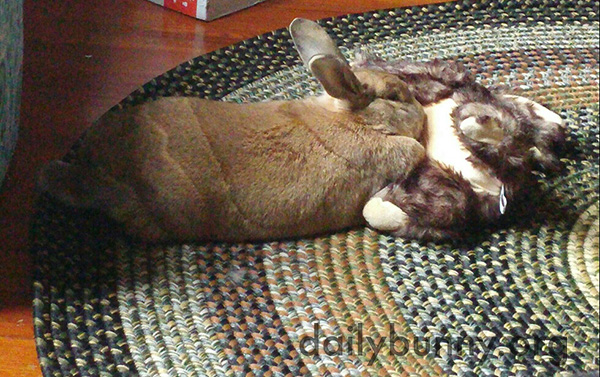 Bunny Has Many Ways of Getting Cozy 2