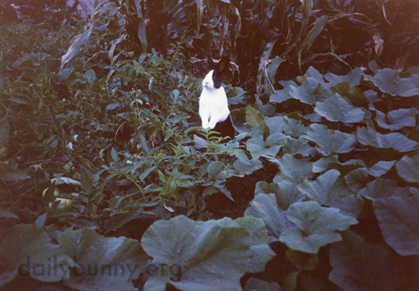 Bunny Stands Up to Survey His Garden