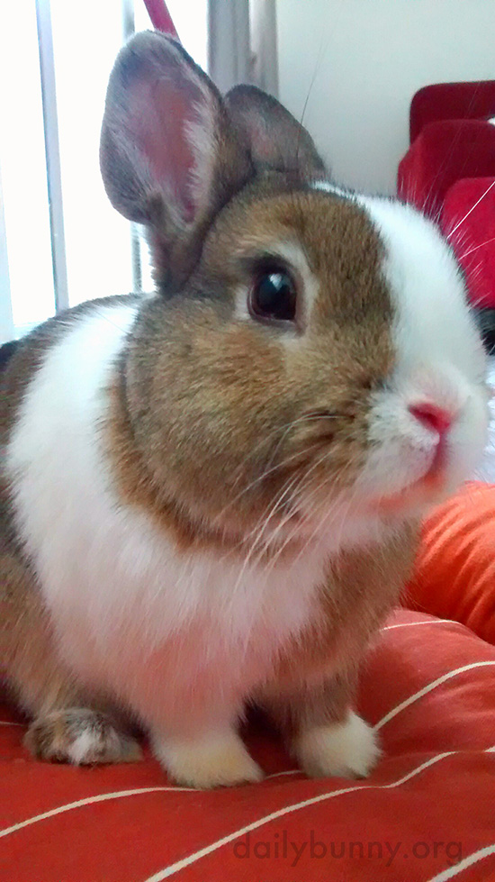 Bunny's Nose Is So Pink