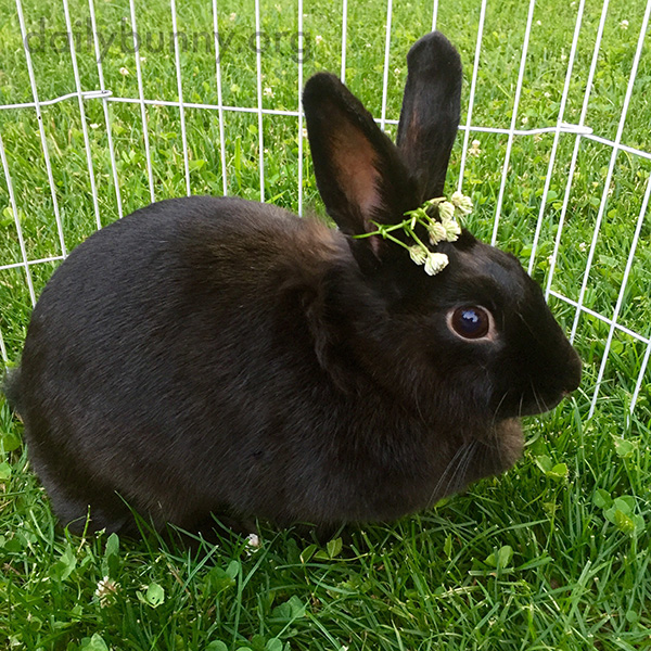 Queen Bunny Wears Her Flower Crown