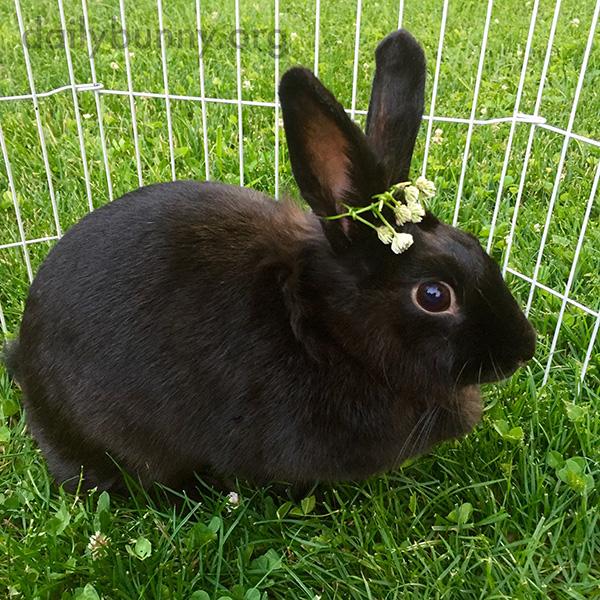 Queen Bunny Wears Her Flower Crown