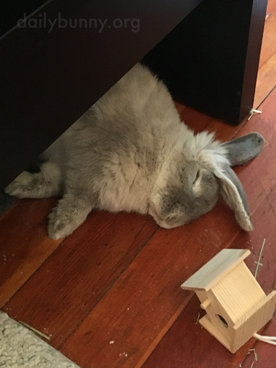 Shh! Don't Disturb Bunny!