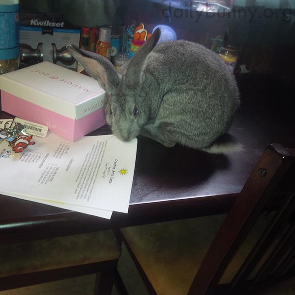 The Bunny Ate My Homework!