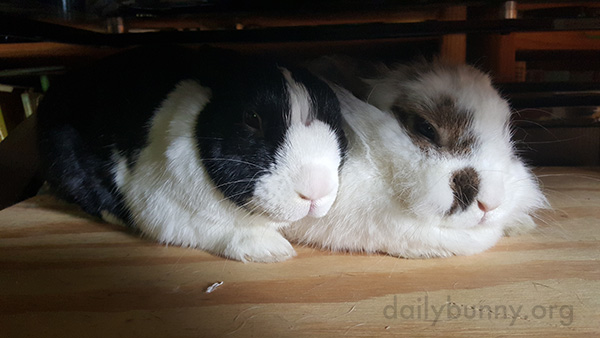 Who Disturbs Our Slumber?