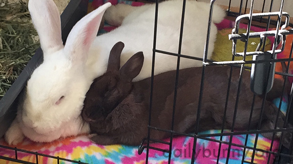 Bunny Can Always Lean on Her Friend