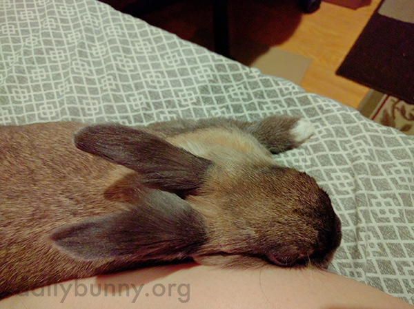 Bunny Demands Attention and Cuddle Time 3