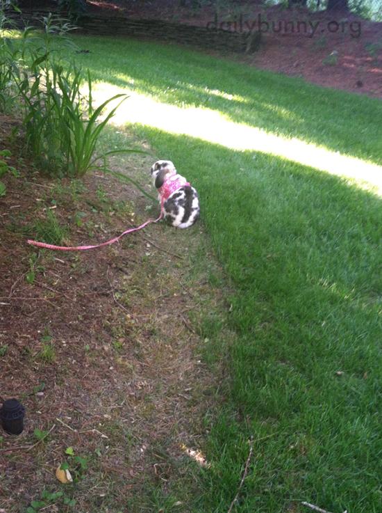 Bunny Explores the Gardens 1