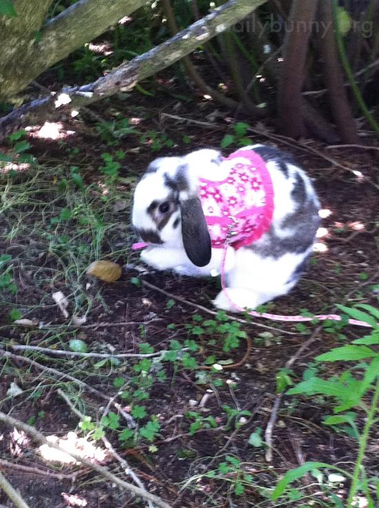 Bunny Explores the Gardens 2