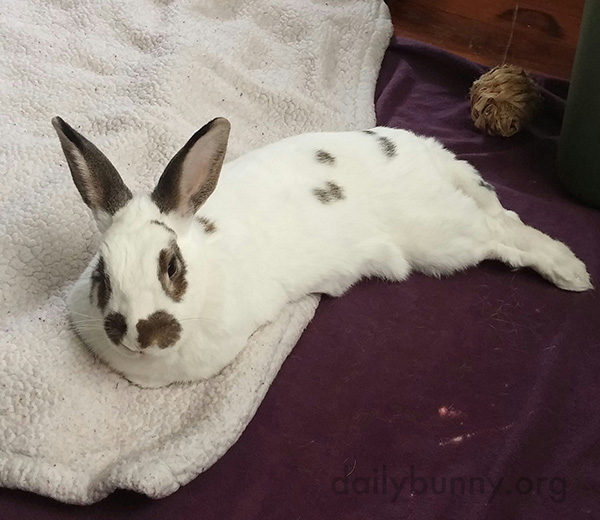 Bunny Is a Pro at Lounging 1