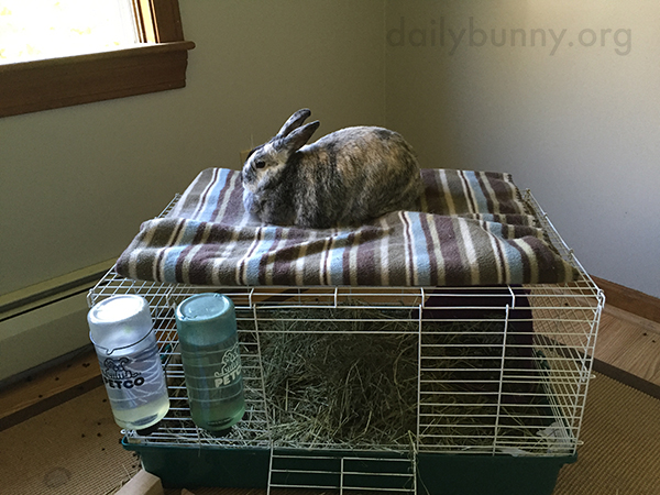 Bunny Loafs Up on a Loft Bed