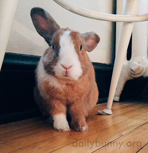 Bunny Looks a Little Dazed After Waking Up from a Nap