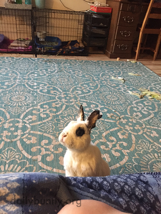 Bunny Will Stare Down Human Until Blueberries Are Shared 1