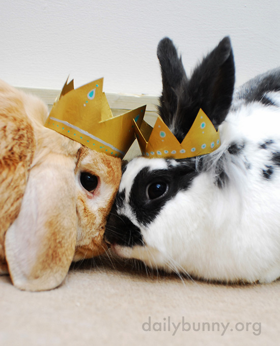 All Hail King and Queen Bunny! 1