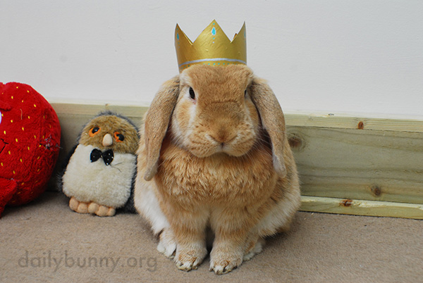 All Hail King and Queen Bunny! 2