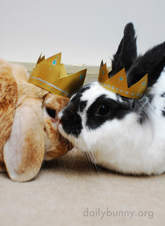 All Hail King and Queen Bunny! 3